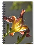 Dark Red Day Lily With Sun Shining Through I Spiral Notebook