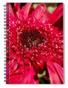Dark Red Gerbera Daisy Spiral Notebook