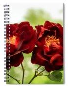 Dark Red Roses Spiral Notebook