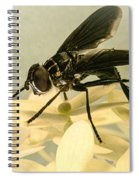 Dark Winged Comb Footed Fly Spiral Notebook