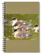 Darling Ducklings  Spiral Notebook