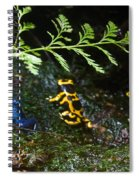 Dart Frogs On The Move Spiral Notebook