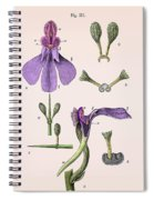 Darwins Orchis Pyramidalis, Illustration Spiral Notebook