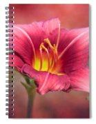 Day Lily Deep Spiral Notebook