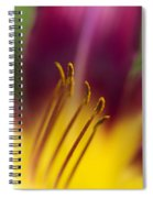 Daylily Abstract Spiral Notebook