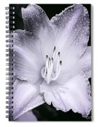 Daylily Flower With A Tint Of Purple Spiral Notebook