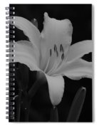 Daylily In Black And White Spiral Notebook