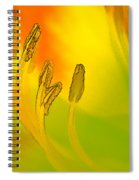 Daylily In Morning Light Spiral Notebook