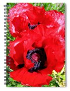 Dazzling Red Poppies Spiral Notebook