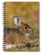 Ddp Djd Snowshoe Hare 98 Spiral Notebook
