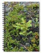 Ddp Djd Spruce Seedling 16 Spiral Notebook