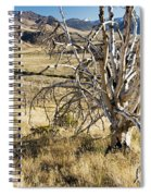 Dead Tree Panorama Spiral Notebook