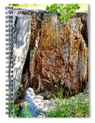 Deadwood On Cherry Creek Trail 3 Spiral Notebook