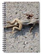 Death By Gum Spiral Notebook