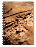 Debarked Tree Spiral Notebook