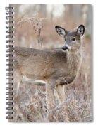 December Doe Spiral Notebook
