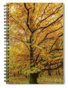 Deciduous Forest In The Autumn Spiral Notebook