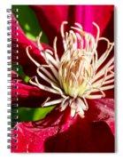 Deep Red Clematis Spiral Notebook