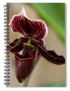Deep Rich Beauty Spiral Notebook