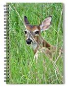 Deer Bedded Down During Mid Day Spiral Notebook