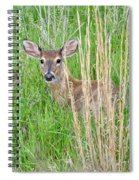 Deer Bedded Down In Grass Spiral Notebook