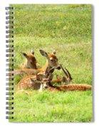Deer Family Spiral Notebook