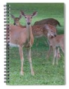 Deer Family Out For Evening Stroll Spiral Notebook