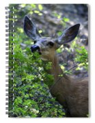 Deer Having Lunch Spiral Notebook