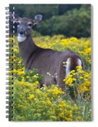 Deer In A Field Of Yellow Flowers Spiral Notebook