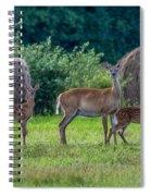 Deer In A Hay Field Spiral Notebook