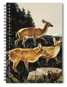Deer In Forest Clearing Spiral Notebook