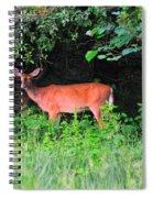 Deer In Overhang Of Trees Spiral Notebook