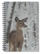 Deer In The Snow Spiral Notebook