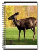 Deer In The Wild Spiral Notebook
