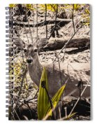 Deer In The Wood Spiral Notebook