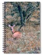 Deer In Woods Spiral Notebook