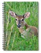 Deer Laying In Grass Spiral Notebook