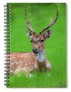 Deer Ruminating Spiral Notebook