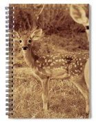 Deer Sepia V3 Spiral Notebook