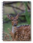 Deer V5 Spiral Notebook