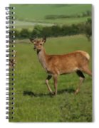 Deers On A Hill Pasture. Spiral Notebook
