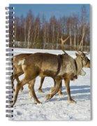 Deers Running On Snow Spiral Notebook