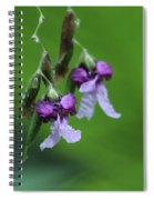 Delicate Blooms Of The Giant Alligator Flag Spiral Notebook