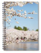 Delicate Blossoms Over The Tidal Basin Spiral Notebook