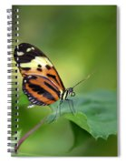 Delicate Butterfly Spiral Notebook