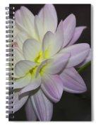 Delicate Dahlia Balance Spiral Notebook
