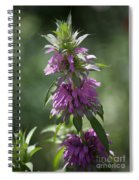 Delicate Desert Flower Spiral Notebook