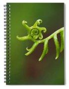 Delicate Fern Frond Spiral Spiral Notebook