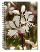 Delicate Gaura Flowers Spiral Notebook