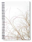 Delicate January Tree Branches Spiral Notebook